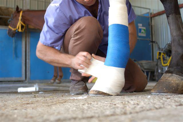 Cheval blessé